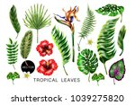 set of realistic tropical...   Shutterstock .eps vector #1039275820