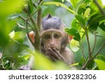 a cute monkey lives in a... | Shutterstock . vector #1039282306