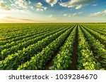 green ripening soybean field ... | Shutterstock . vector #1039284670