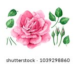 set   collection of pink rose ... | Shutterstock .eps vector #1039298860