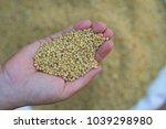 diammonium phosphate  dap  the... | Shutterstock . vector #1039298980