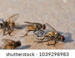 close up  flies on glue paper . | Shutterstock . vector #1039298983