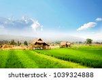 field   farm  rice field ... | Shutterstock . vector #1039324888