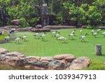 wildlife and rainforest exotic... | Shutterstock . vector #1039347913