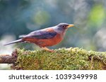 beautiful colorful bird  female ... | Shutterstock . vector #1039349998