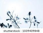 blur flowering grass spread in...   Shutterstock . vector #1039409848