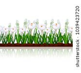 lawn with flowers crocuses and... | Shutterstock .eps vector #1039423720