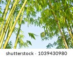 beautiful bamboo forest | Shutterstock . vector #1039430980