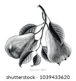 pears fruit hand drawing... | Shutterstock .eps vector #1039433620