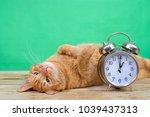 orange ginger tabby cat laying... | Shutterstock . vector #1039437313