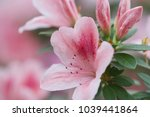 blur floral background lush... | Shutterstock . vector #1039441864