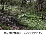 green ground cover with barren... | Shutterstock . vector #1039444450