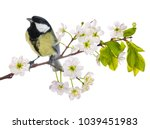 great tit on cherry tree... | Shutterstock . vector #1039451983