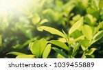 close up leaves with morning... | Shutterstock . vector #1039455889