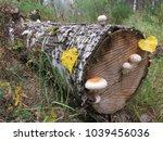 A Dead Fallen Tree And...