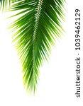 Detail Of Coconut Trees Leaf...