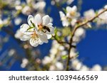 spring background. beautifully...   Shutterstock . vector #1039466569