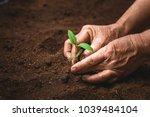 hands of farmer growing plant a ...   Shutterstock . vector #1039484104