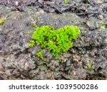Close Up Of Vivid Green Moss...