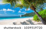 beautiful sandy beach with palm ... | Shutterstock . vector #1039519720
