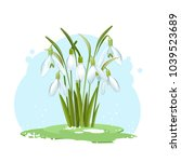 galanthus snowdrop flowers on a ... | Shutterstock .eps vector #1039523689