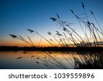 a lake with reed at sunset   Shutterstock . vector #1039559896