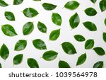 green leaves isolated on white... | Shutterstock . vector #1039564978