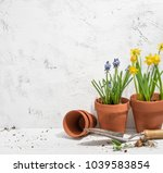 flowers in pots ready for... | Shutterstock . vector #1039583854