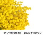beautiful mimosa flower twig...   Shutterstock . vector #1039590910