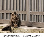 the elegance of the feline... | Shutterstock . vector #1039596244