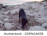 photograph of a dog playing... | Shutterstock . vector #1039616428