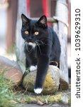 playful black cat in the garden.... | Shutterstock . vector #1039629310