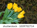 yellow tulips bouquet. yellow... | Shutterstock . vector #1039702714