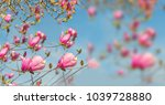 spring time  flowers nature... | Shutterstock . vector #1039728880