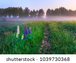 the bush of lupine blossoms... | Shutterstock . vector #1039730368
