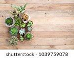 succulent plants in pot on... | Shutterstock . vector #1039759078