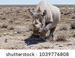 Attack From A Black Rhino In...