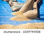 a asian man drying coffee beans ...   Shutterstock . vector #1039794508
