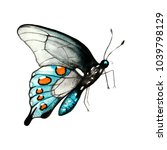 illustration butterfly... | Shutterstock . vector #1039798129