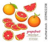 grapefruit vector set   Shutterstock .eps vector #1039822258