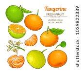 tangerine fruit vector set | Shutterstock .eps vector #1039822339