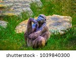monkey sitting and thinking | Shutterstock . vector #1039840300