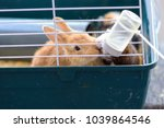 rabbits drinking water from... | Shutterstock . vector #1039864546