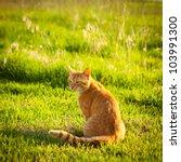 Ginger Tabby Cat Sitting In...