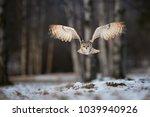 eagle owl  bubo bubo  huge owl  ... | Shutterstock . vector #1039940926