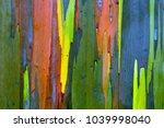 bark of a rainbow eucalyptus ... | Shutterstock . vector #1039998040