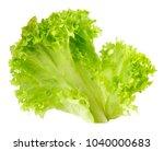 leaf fresh lettuce isolated on... | Shutterstock . vector #1040000683