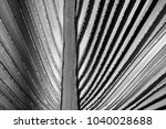 the black and white pattern of... | Shutterstock . vector #1040028688
