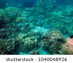 sealife of tranquility island ... | Shutterstock . vector #1040048926