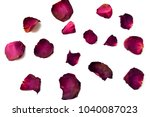 Stock photo dry petal of rose isolated on white background 1040087023